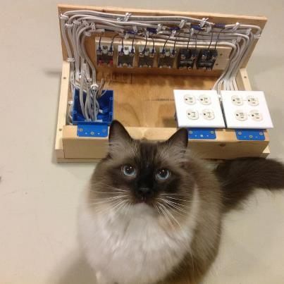 Cat and box of wiring