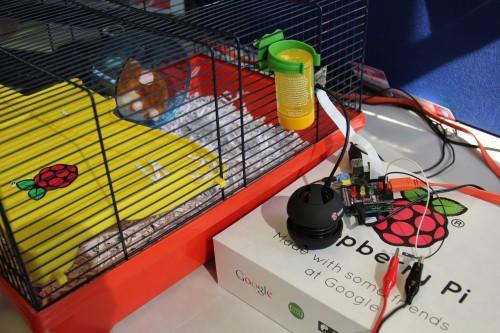 hamstercam1