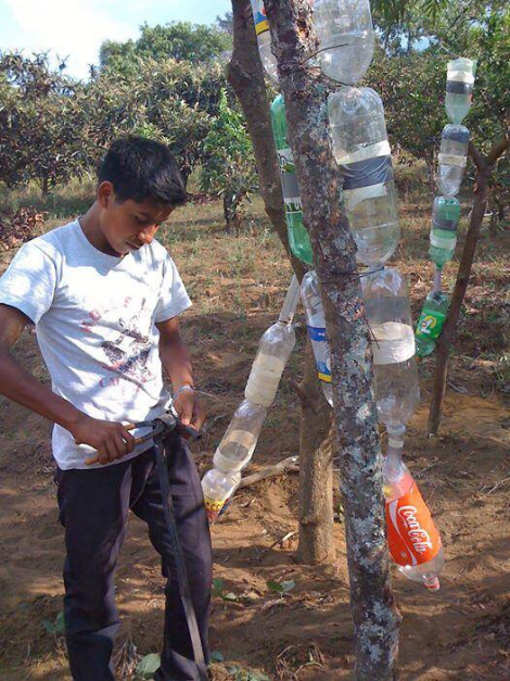 A  drip irrigation systems made from old plastic bottles, using how-to content from RACHEL-Pi