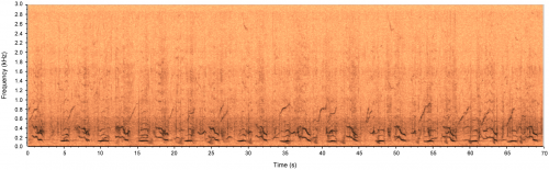 Spectrogram of Humpback whale vocalisations