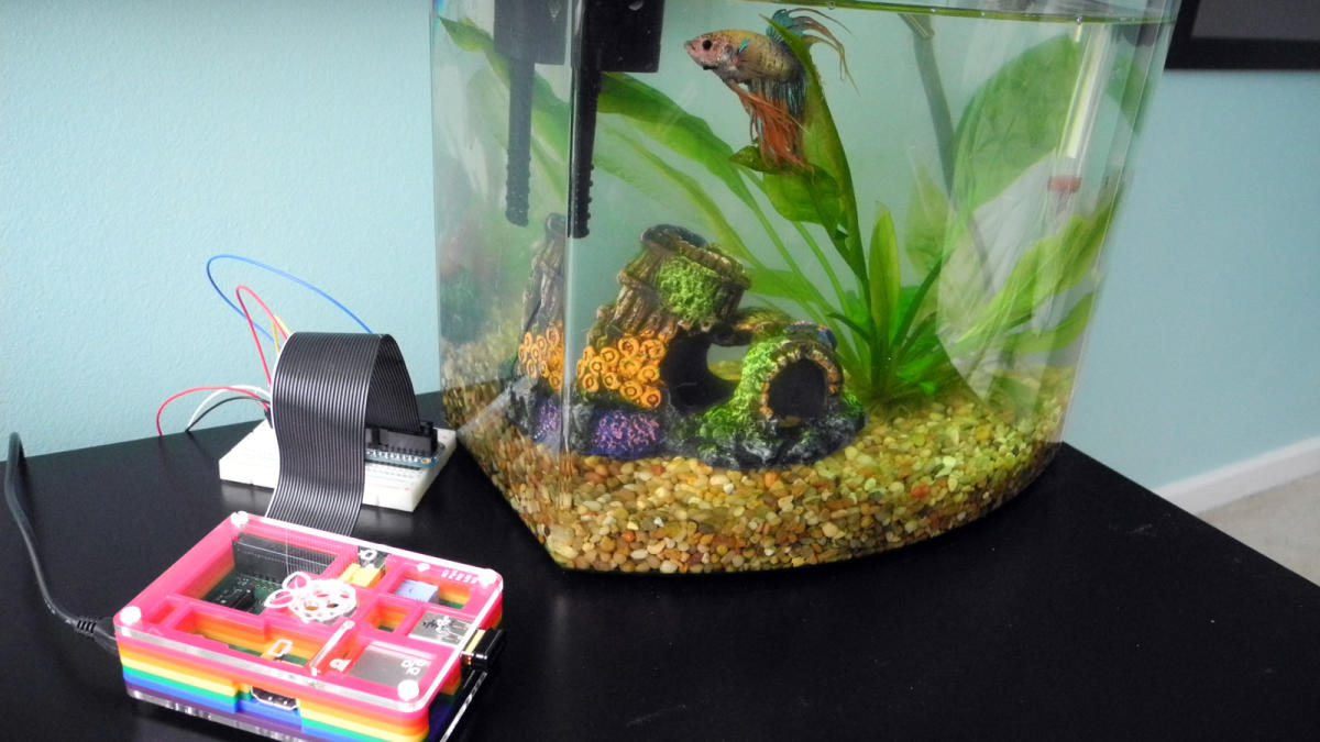 Fish tank temperature probe: an ideal beginner's project - Raspberry Pi