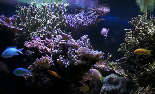 Aquarium lighting and weather system - Raspberry Pi