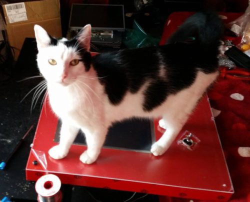 A cat standing on a PIK3A gaming table protected with a sheet of transparent acrylic