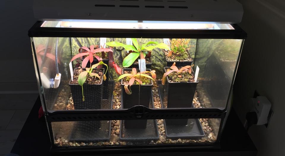 Build your own Raspberry Pi terrarium controller
