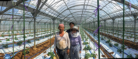 cucumber-farmer-3