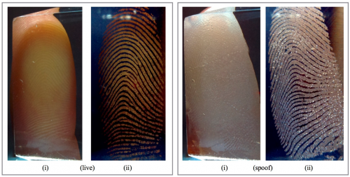 Comparison of live and spoof fingerprints