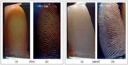 Comparison of live and spoof fingerprints