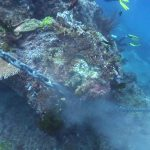reef damaged by anchor