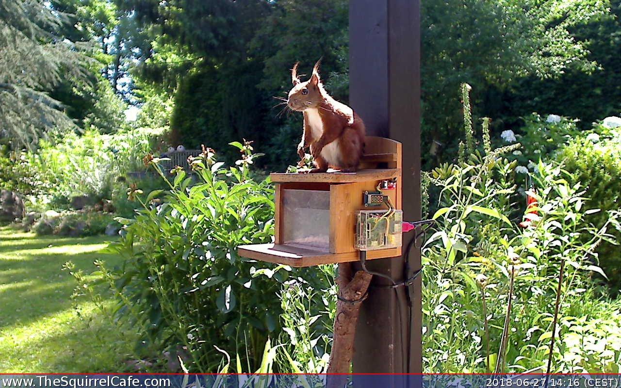 Squirrel Cafe Raspberry Pi The MagPi