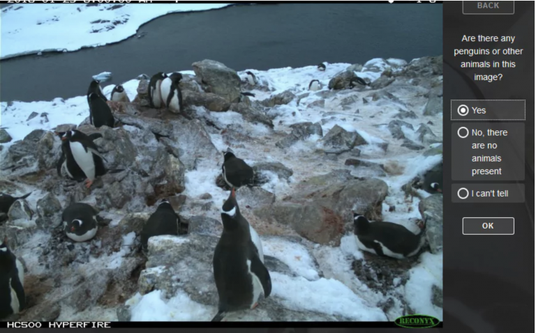 Penguin Watch — Pi Zeros and Camera Modules in the Antarctic