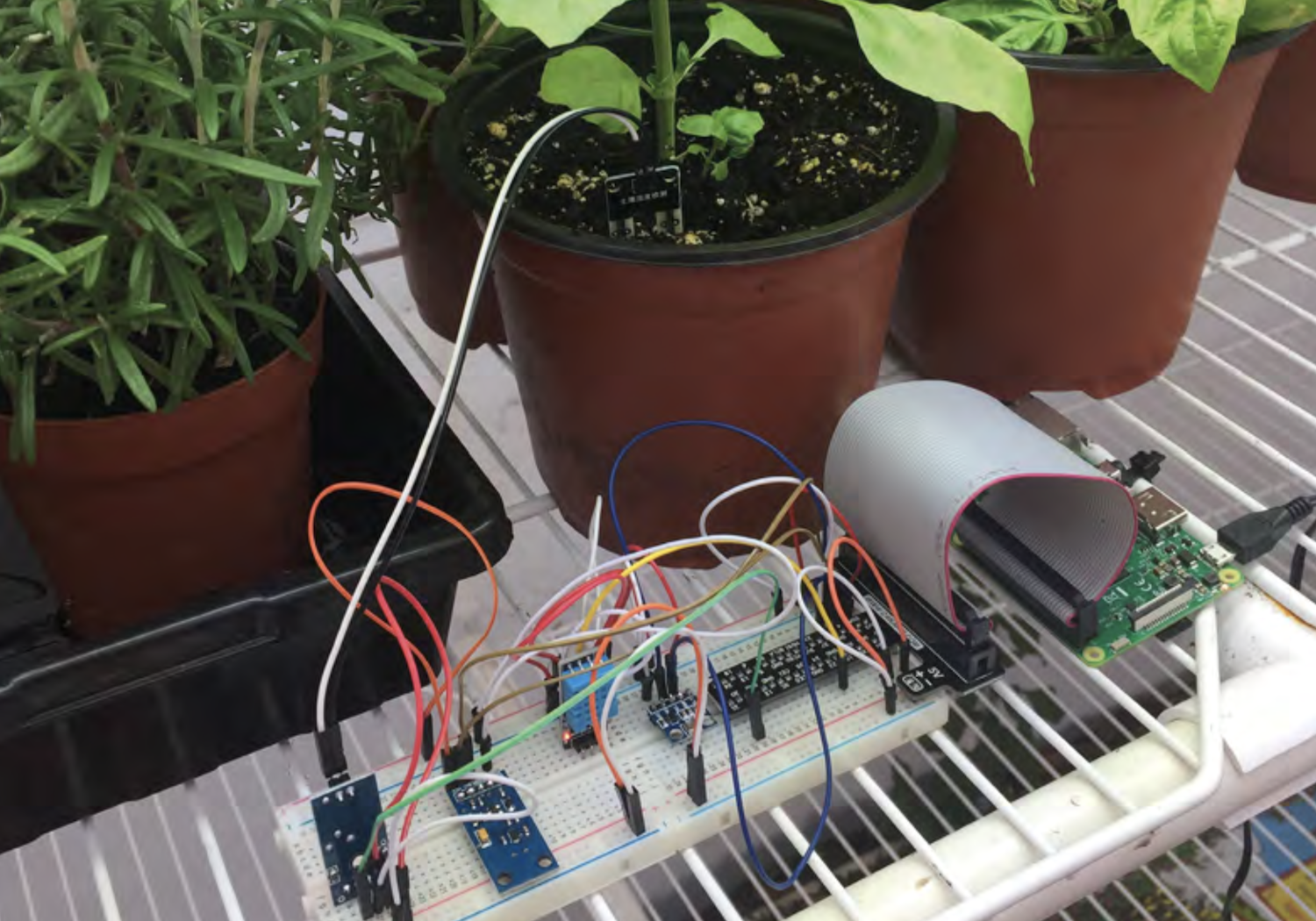 Using data to help a school garden - Raspberry Pi