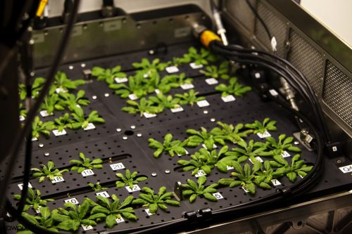 A neat grid of small leafy plants on a black plastic tray. Metal housing and tubing is visible to the sides.