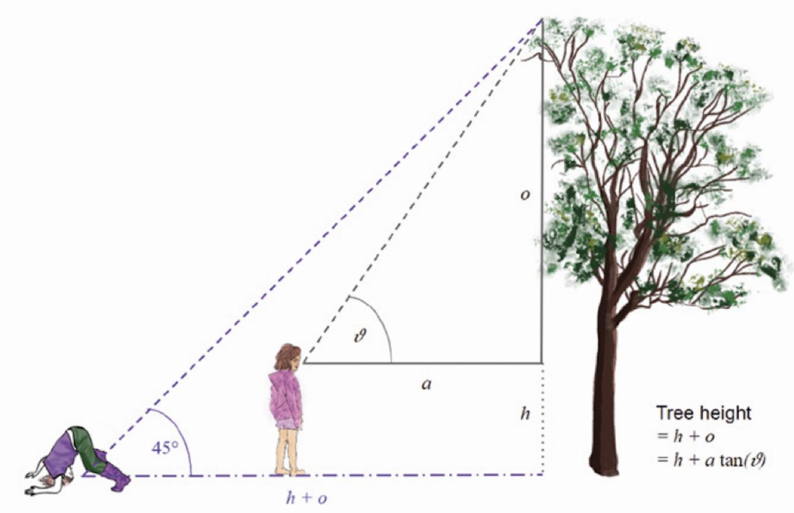 Exploring the interface of ecology, mathematics, and digital making | Hello World #11 - Raspberry Pi
