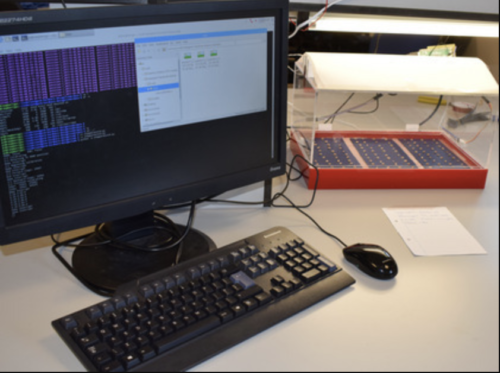 seed genotyping at a computer